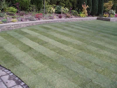 We are experts in lawn turfing